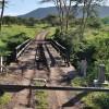 Serengeti - Ponte di legno