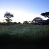 Serengeti - Alba africana