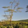 Serengeti - Aquila di vedetta