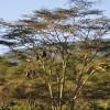 Serengeti - Scimmie
