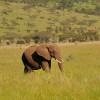 Serengeti - Mandria di elefanti