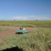 Serengeti - Pic nic?