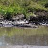 Serengeti - Coccodrillo