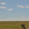 Elefanti all'orizzonte