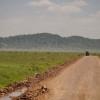 La grande migrazione - Zebre e gnu