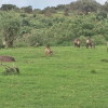 Dalla finestra della nostra camera - Ngorongoro Rhino Lodge