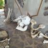 Mini museo a Seronera