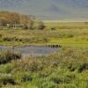 Ngoro ngoro - Ippopotami nello stagno
