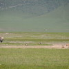 Ngoro ngoro - Rinoceronte e iene