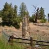 Yellowstone - Albero fossile