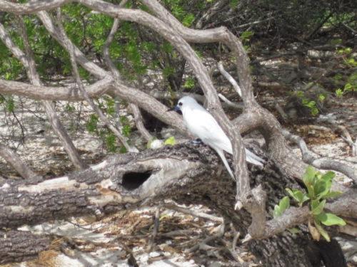 Isola degli uccelli