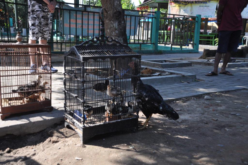 Mercato degli Uccelli