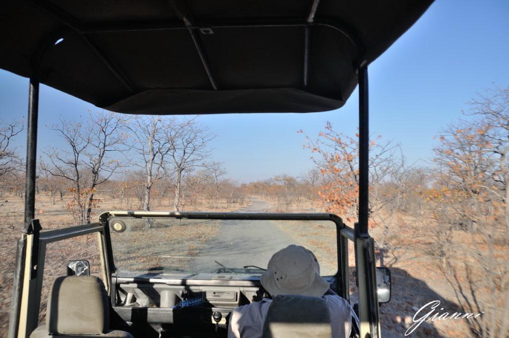 In viaggio verso i baobab