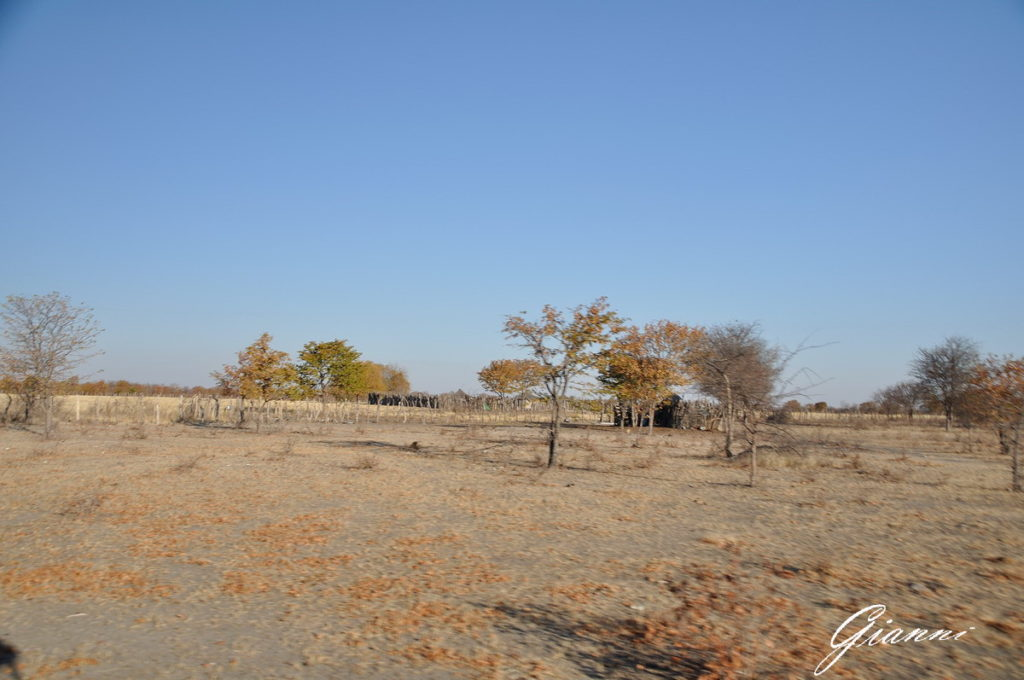 Il bush a Gweta