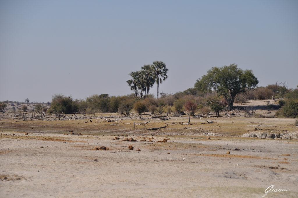 Il bush arido