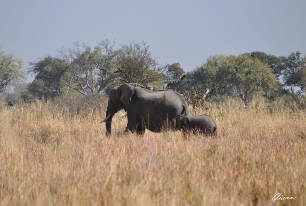 Mamma elefante e piccolo