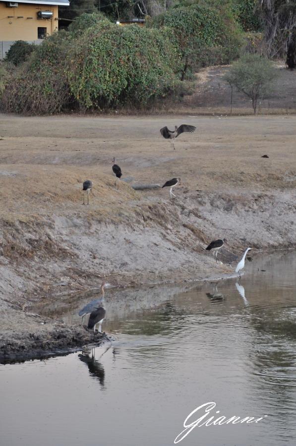 Uccelli a pesca