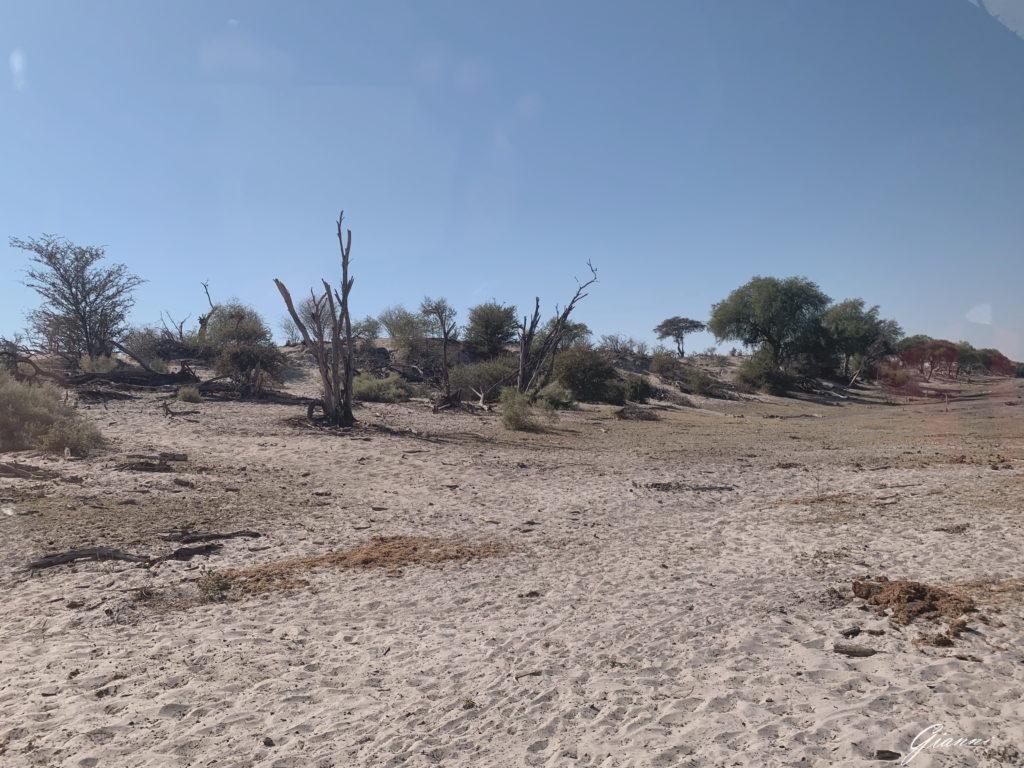 Sabbia e cespugli