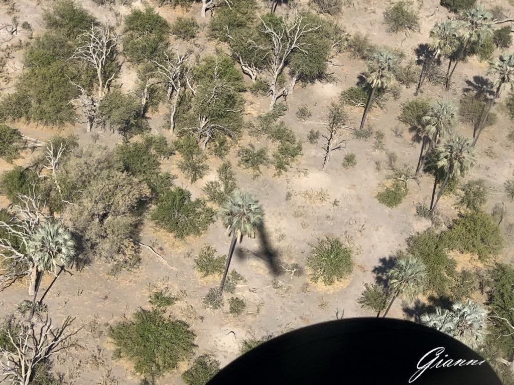 Toh... l'ombra di un aereo