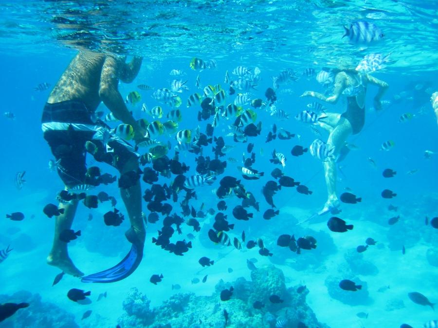 Giardino dei Coralli