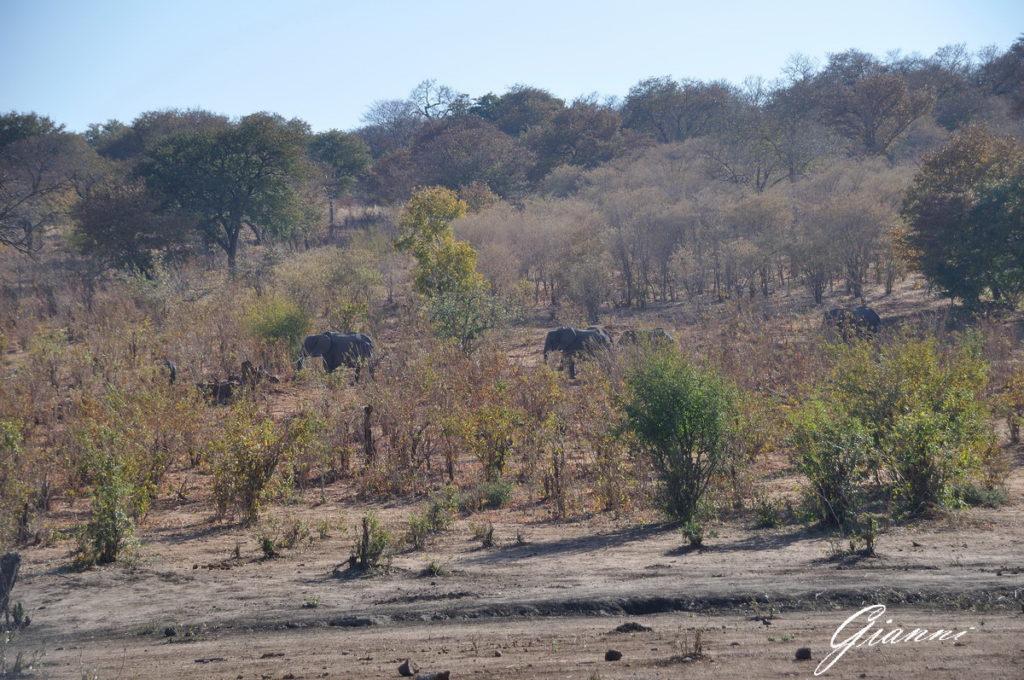 Elefanti nel bush