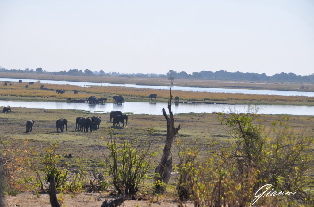 Elefanti sulle rive del Chobe