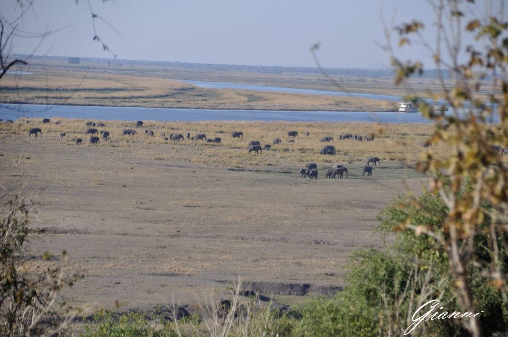 Parco nazionale del Chobe