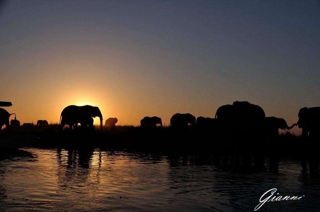 Tramonto ed elefanti