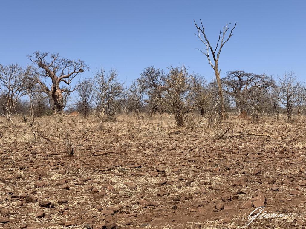 Alberi e siccità