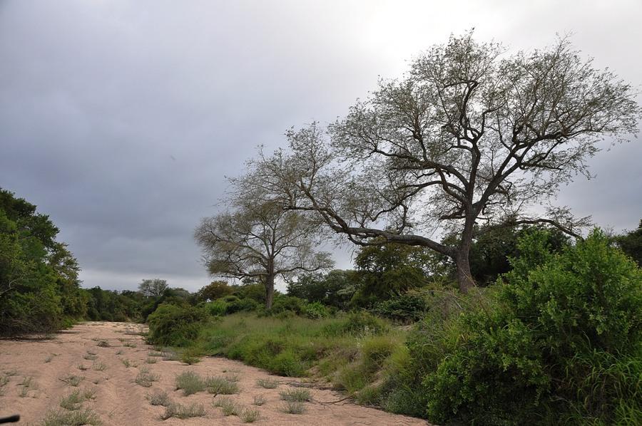 Panorama Kruger National Park