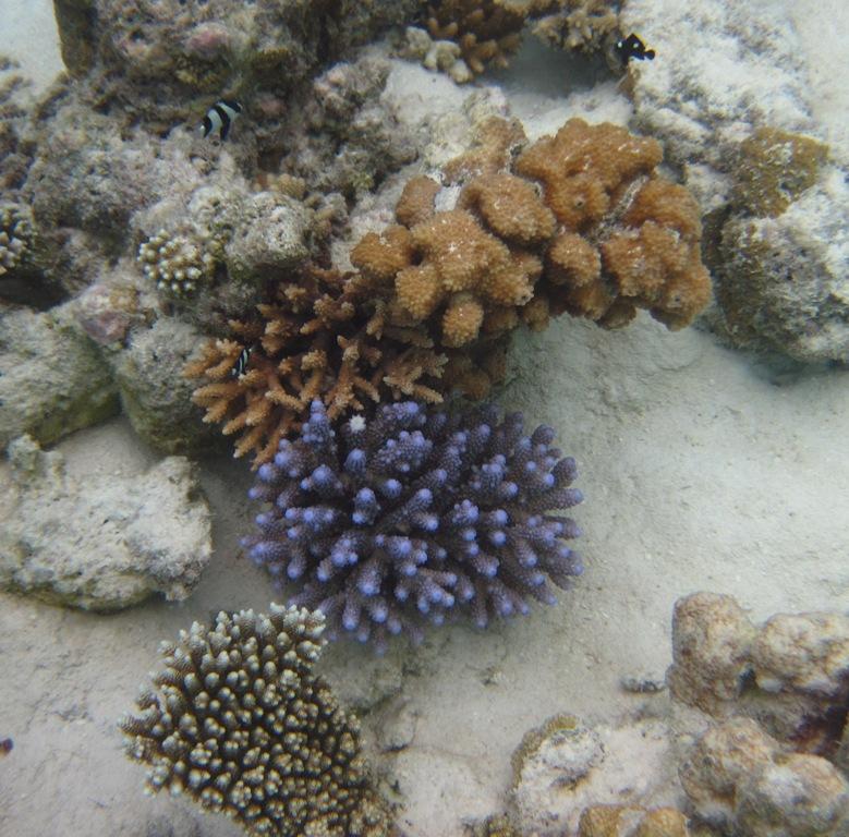 barriera corallina alle Maldive