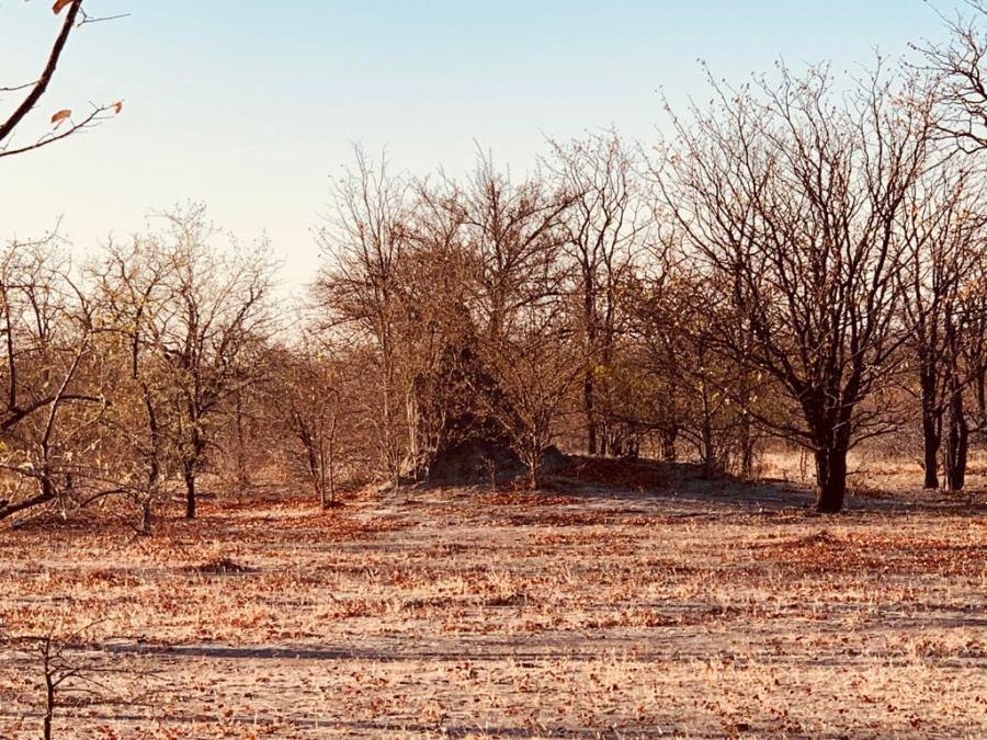 Il bush presso Gweta
