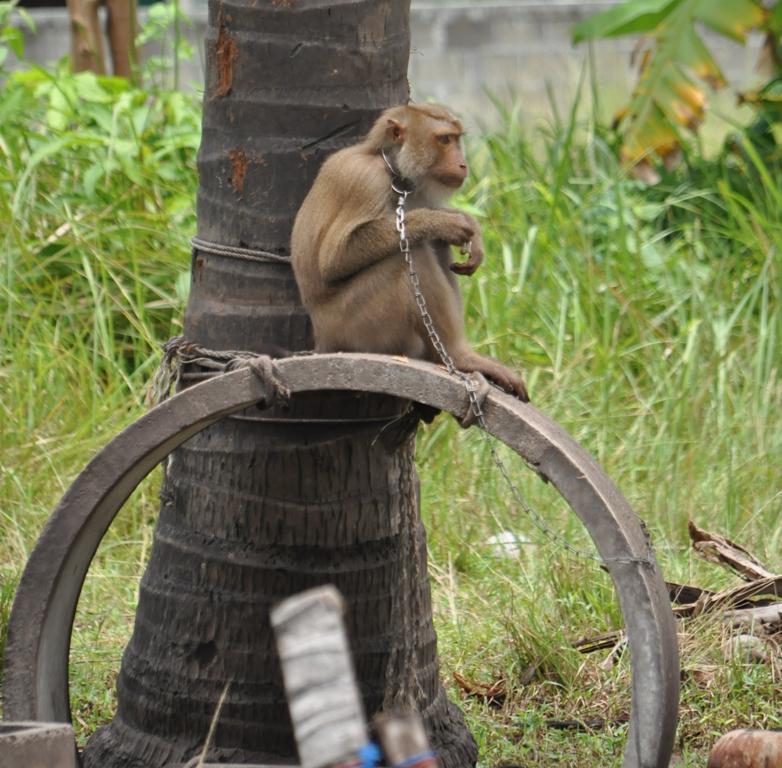 Monkey Show