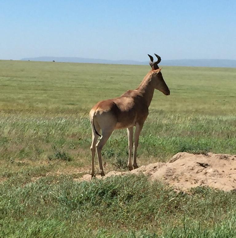 Nel Serengeti