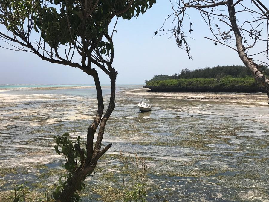 Bassa marea a Zanzibar