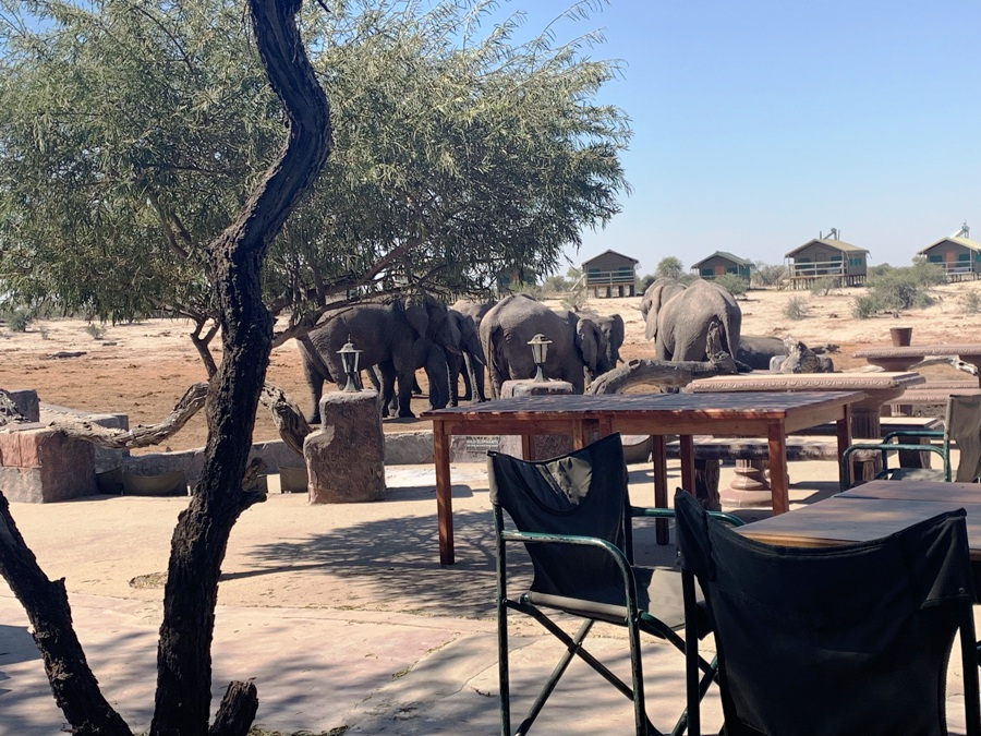 Elefanti all'Elephant Sands