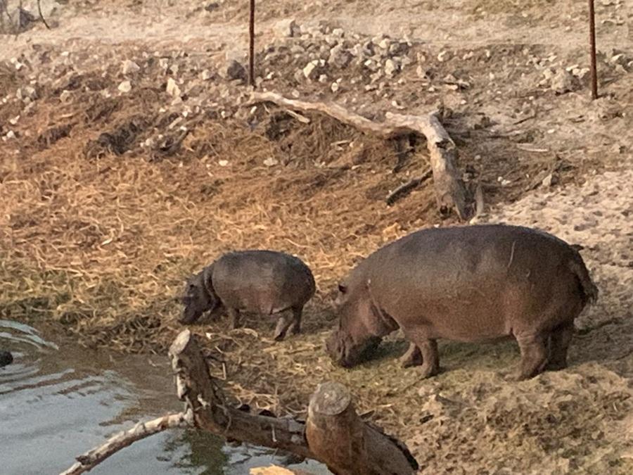 Botswana Ippopotami