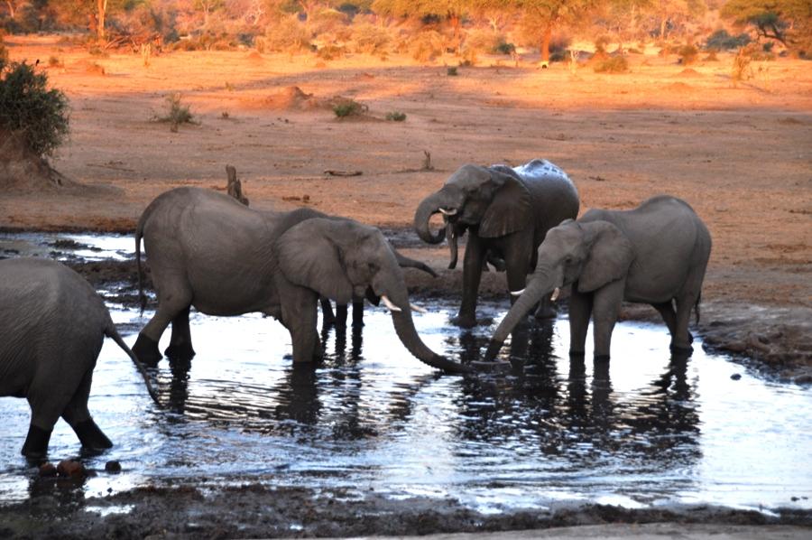 mangiare in botswana