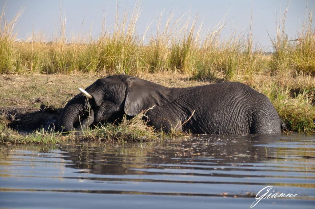 Elefante a mollo