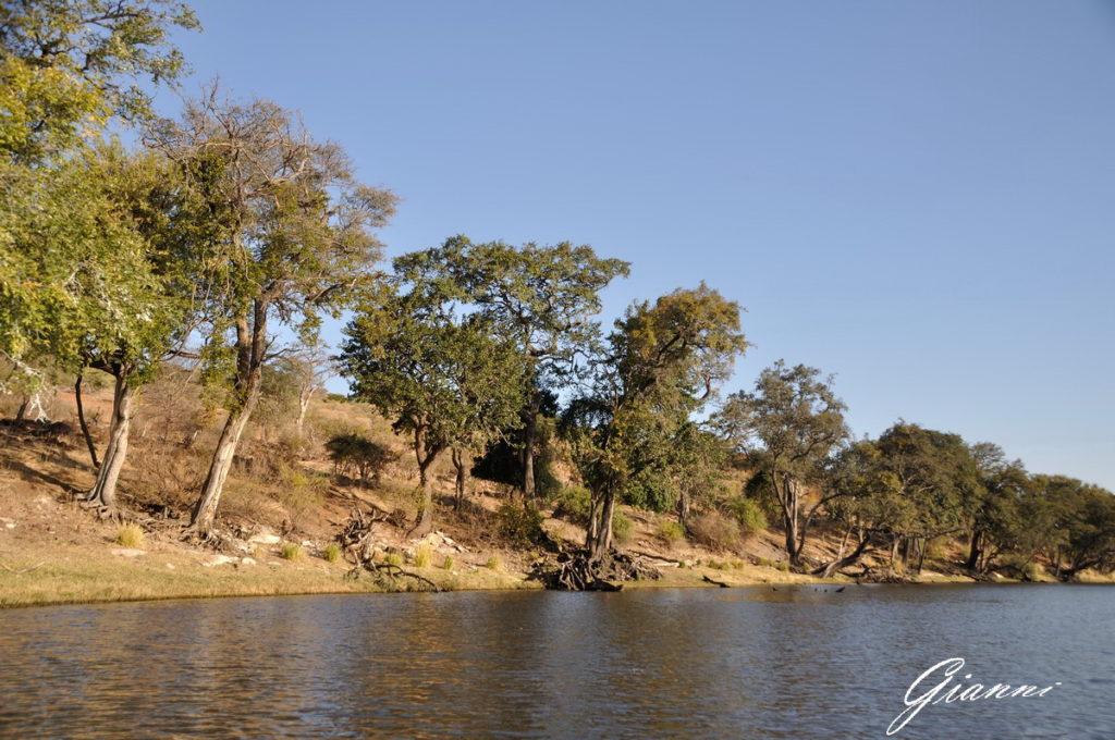 Le rive del fiume Chobe