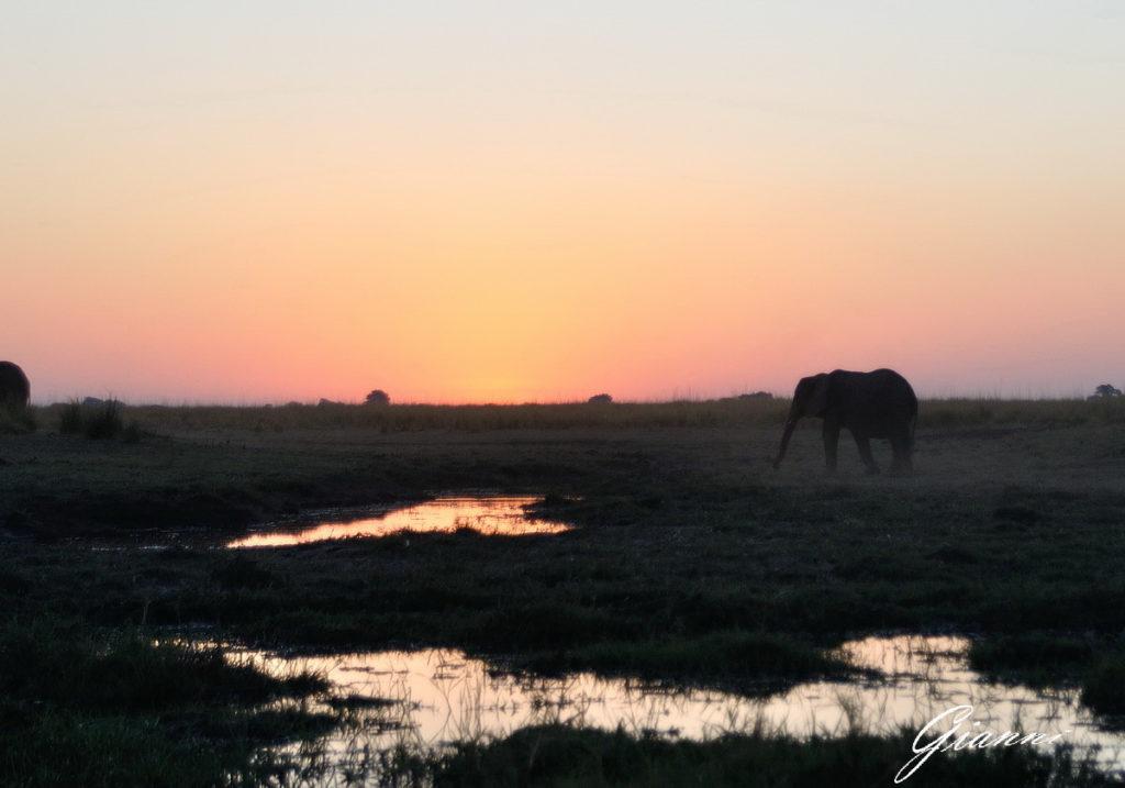 Elefanti lungo il fiume