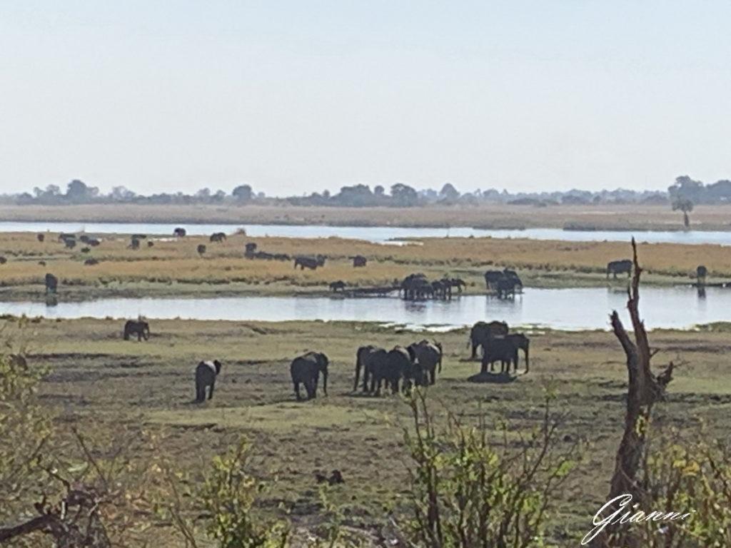 Gruppo di elefante