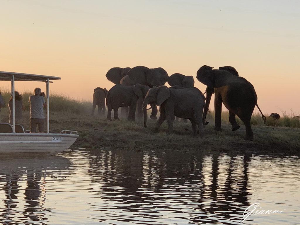 Elefanti guadano il canale