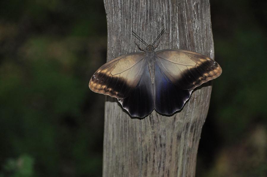 Farfalla a Butterfly World