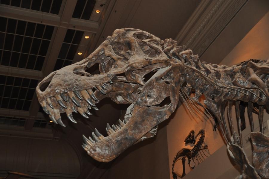 Museo di Storia Naturale Washington DC