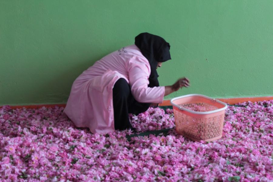 Donna al lavoro nella Valle della Rose Marocco del Sud