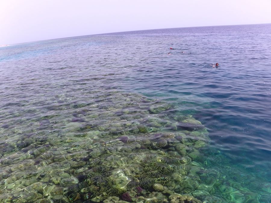 Marsa Alam Barriera Corallina