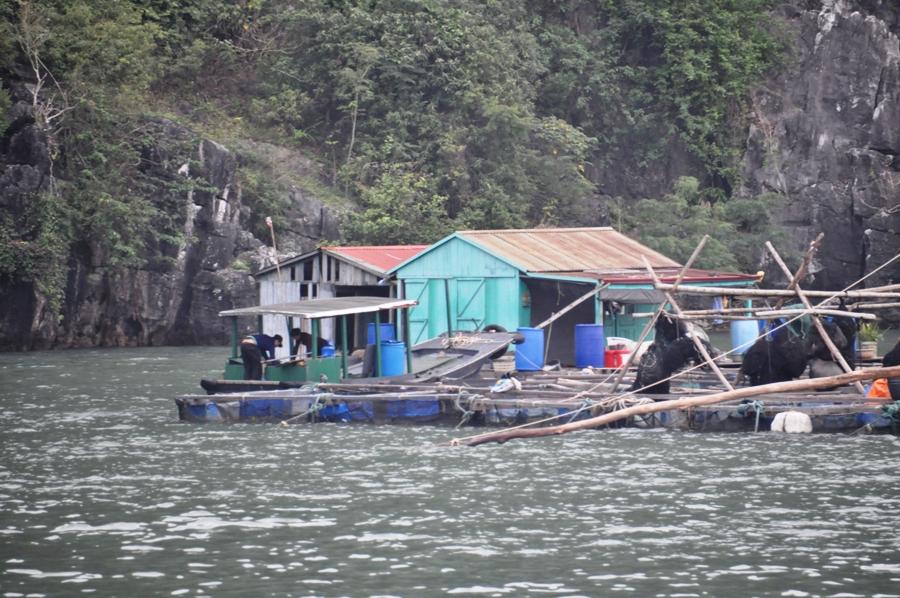 Villaggio galleggiante nella Baia di Lan Ha