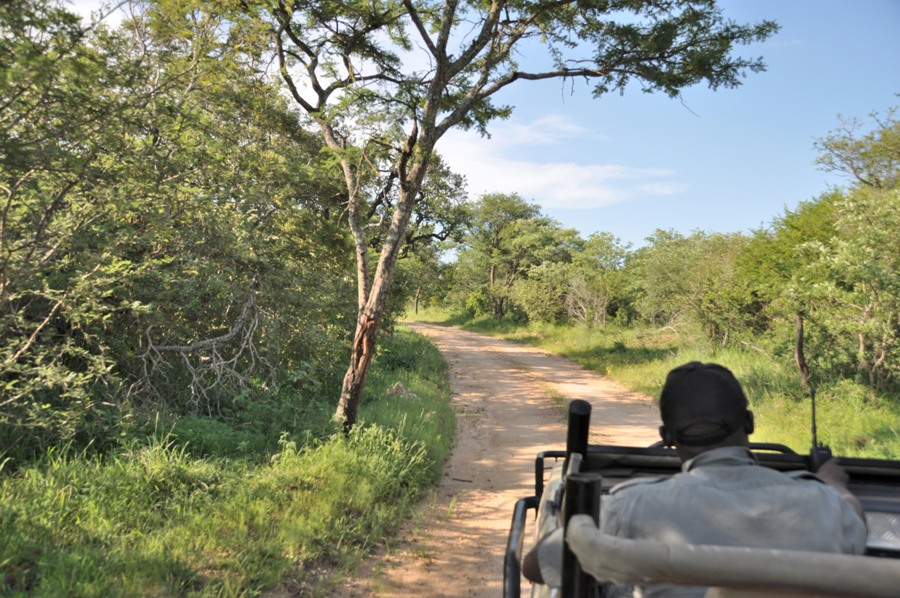 Safari nel Kruger National Park