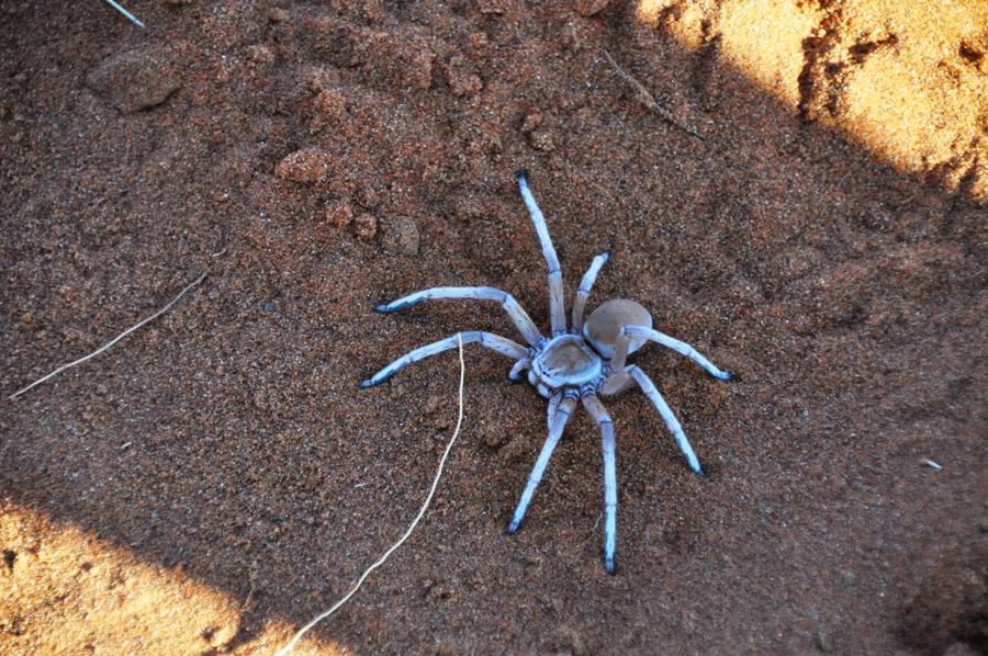 Un ragno nella sabbia
